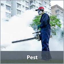 Commercial  Ant Control Johannesburg
